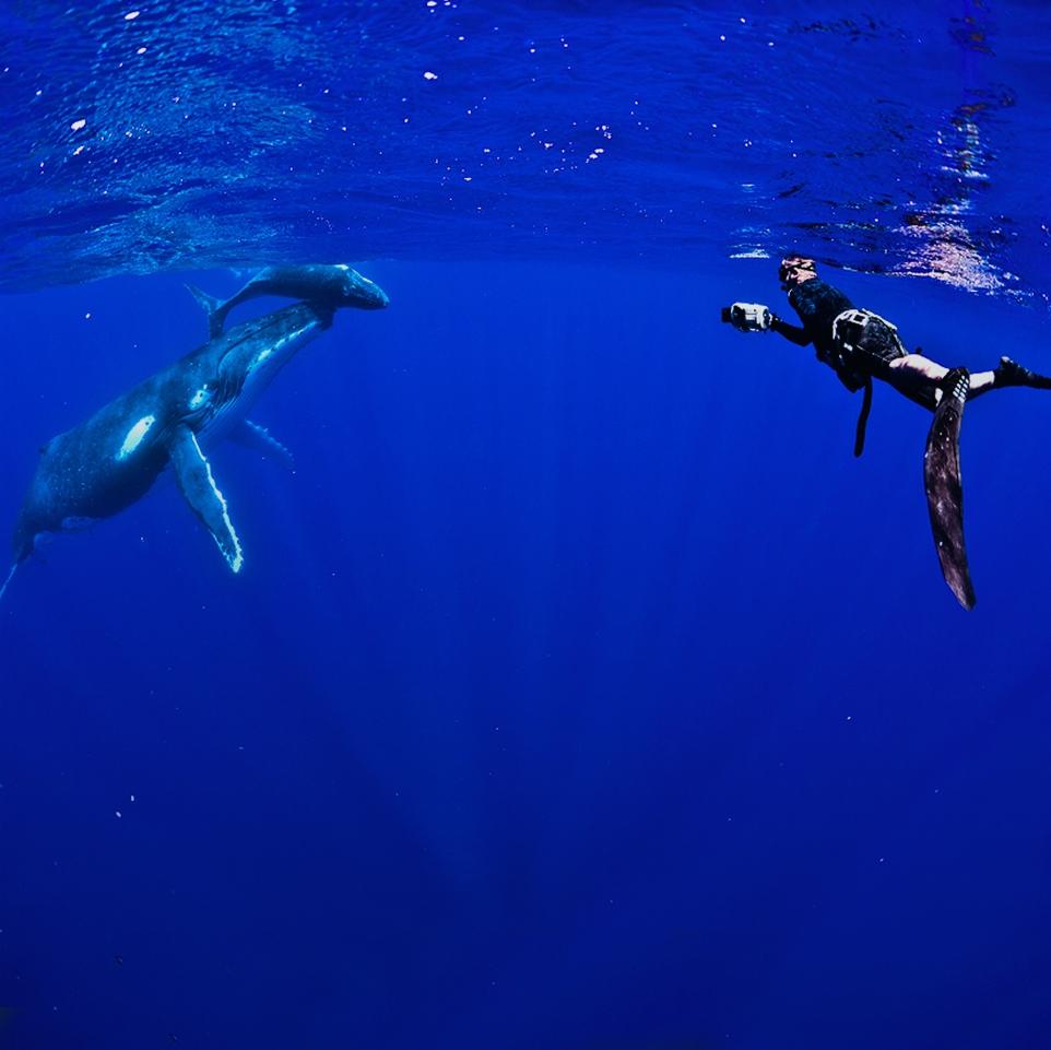 Whale Tours
