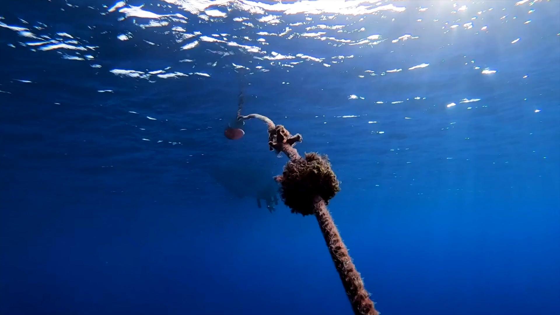 Niue Blue